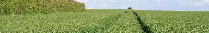 Irish Certified Seed produced under Irish conditions for Irish Farmers