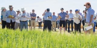 Low disease pressure at Ballyderown Cereal Trials