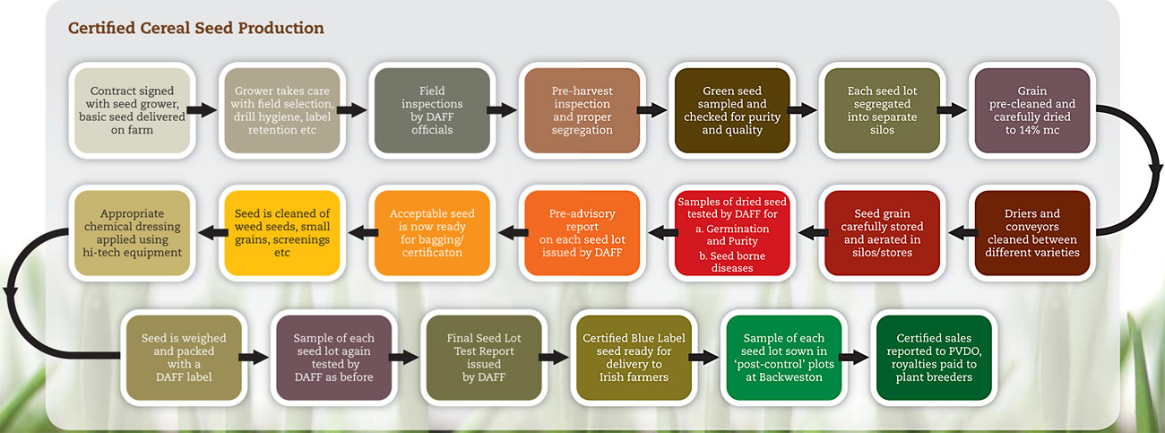 production process of certified seed irish seed trade association